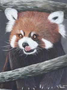 petit panda roux - pastel