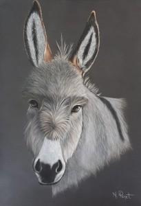 mon ane gris